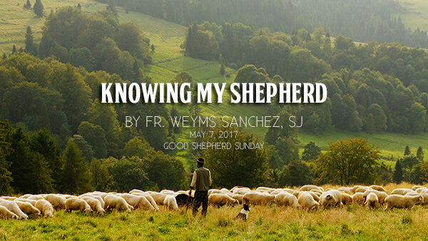 Knowing My Shepherd (Good Shepherd Sunday)